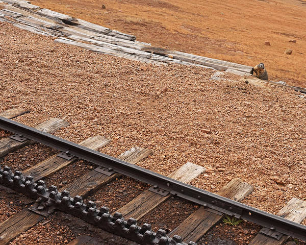 Photograph - Pikes Peak Cog Rail Colorado Gopher by Toby McGuire