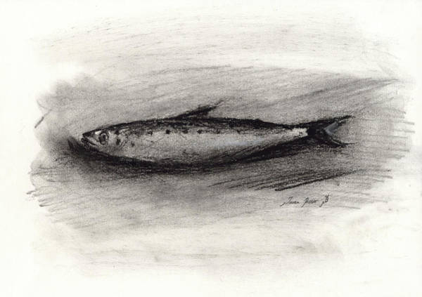 Wall Art - Painting - Pilchard Drawing by Juan Bosco