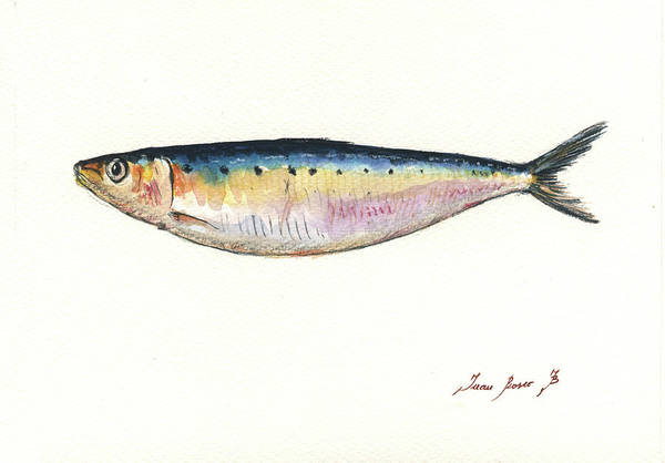 Saltwater Wall Art - Painting - Pilchard Watercolor by Juan Bosco