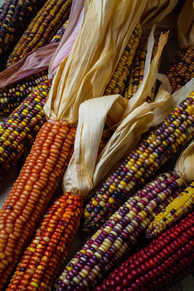 Indian Corn Photograph - Pile Of Indian Corn by Garry Gay