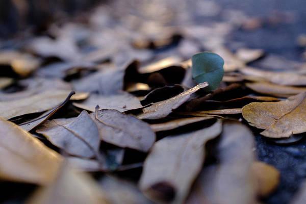 Pile Of Leaves At Dusk In Savannah Georgia Art Print