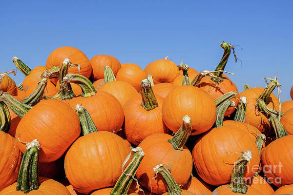 Photograph - Pile Of Pumpkins by Iryna Liveoak