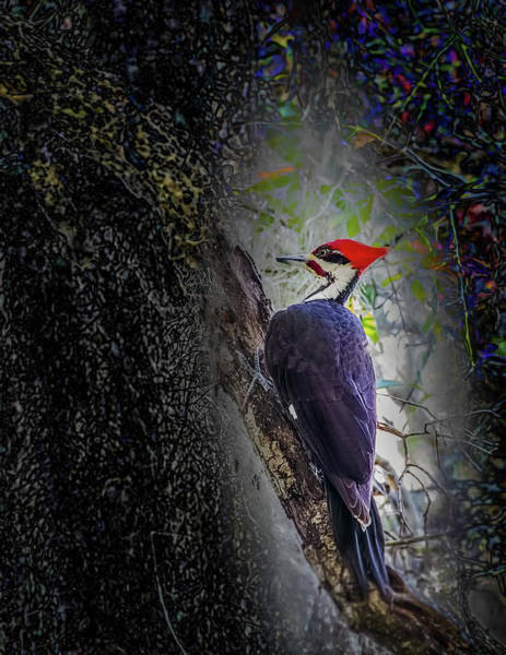 Photograph - Pileated Woodpecker by Richard Goldman