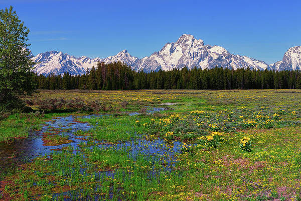 Photograph - Pilgrim Creek Spring Meadow by Greg Norrell