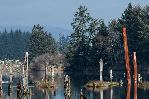 Photograph - Pilings For Logging by Robert Potts