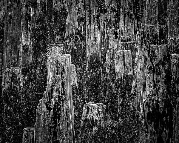 Photograph - Pilings by Robert Mitchell