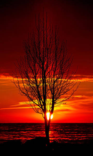 Photograph - Pillared Tree by Phil Koch