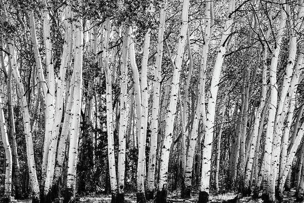Photograph - Pillars Of The Wilderness by James BO Insogna