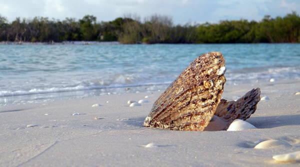 Photograph - Pin Shell by Sean Allen