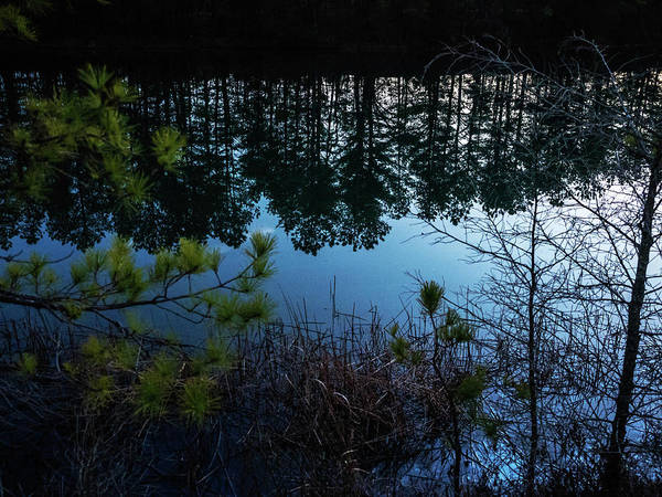 Photograph - Pine Barren Reflections by Louis Dallara