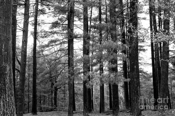 Wall Art - Photograph - Pine Barrens by John Rizzuto