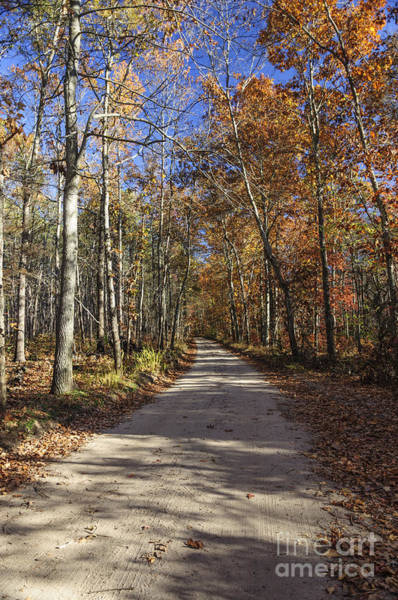 Photograph - Pine Barrens Road II by Debra Fedchin