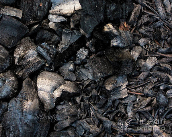 Photograph - Pine Cone Cinders by Natalie Dowty