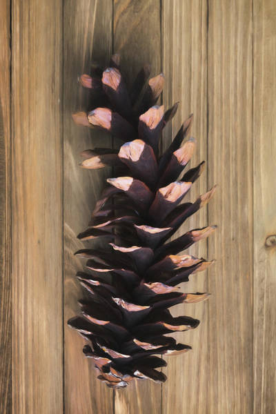 Wall Art - Photograph - Pine Cone I by Tom Mc Nemar