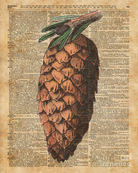 Wall Art - Digital Art - Pine Cone Vintage Dictionary Book Page Artwork  by Anna W