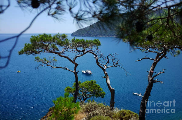 Photograph - Pine Forest Above Sea Seascape Artmif.lv by Raimond Klavins