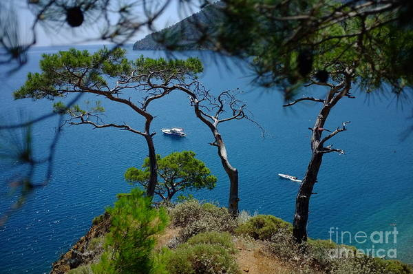 Photograph - Pine Forest Over Sea Adrasan Seascape Artmif by Raimond Klavins