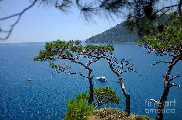 Photograph - Pine Forest Over Sea Seascape Artmif.lv by Raimond Klavins