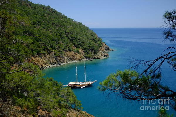 Photograph - Pine Forest Over Sea Yacht Artmif.lv by Raimond Klavins