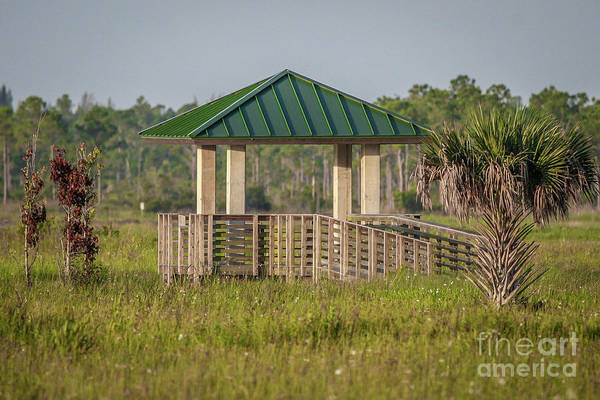 Photograph - Pine Glades Observation Deck by Tom Claud