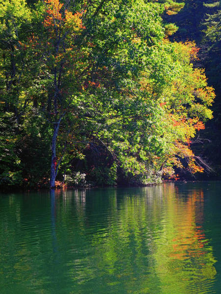 Photograph - Pine Grove State Park Is Part Of The Pa At 2 by Raymond Salani III