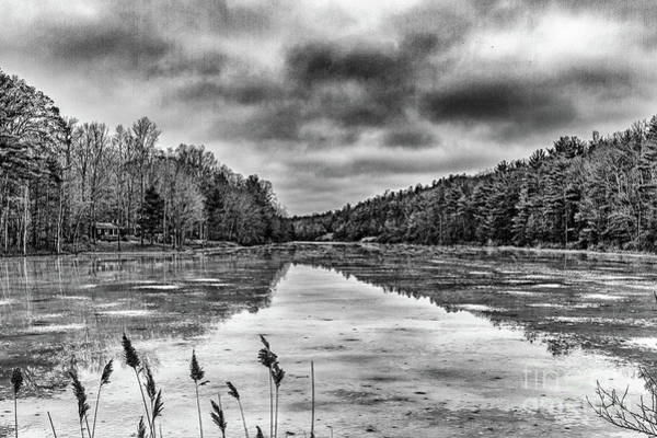 Photograph - Pine Lake In Black And White by William Norton