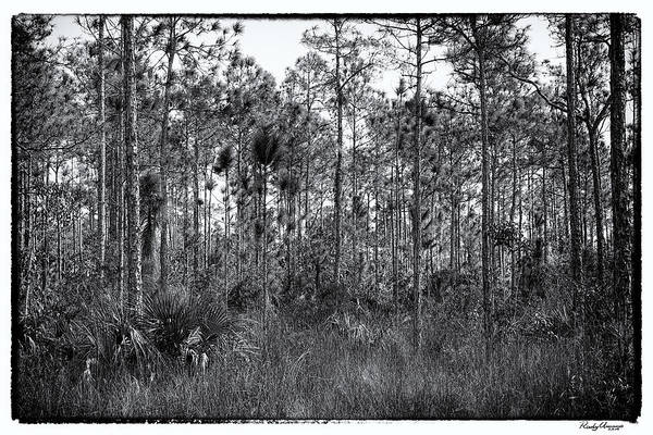 Photograph - Pine Land In B/w by Rudy Umans