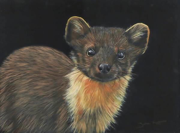 Painting - Pine Marten by John Neeve