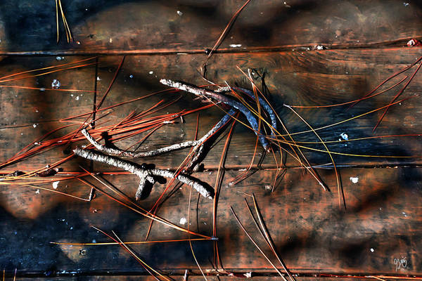 Photograph - Pine Needles And Sticks by Gina O'Brien