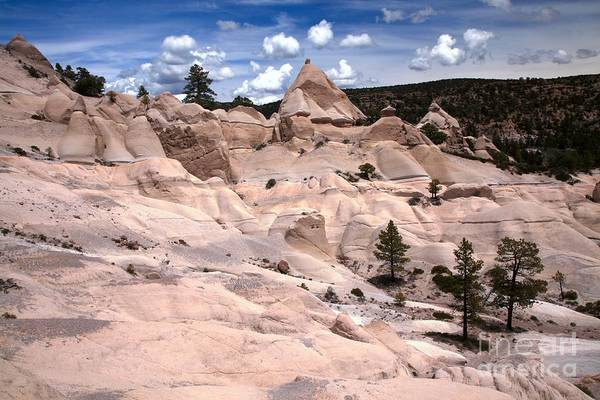 Photograph - Pine Park Utah by Adam Jewell