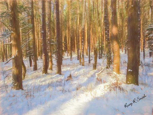 Digital Art - Pine Stand In Soft Late Afternoon Sunlight. by Rusty R Smith