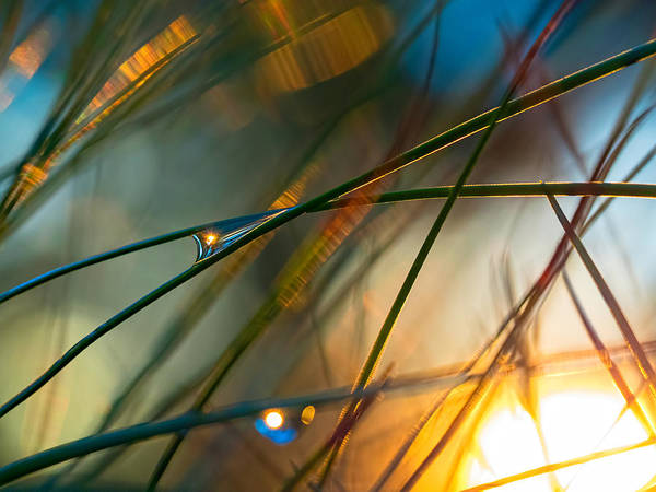 Photograph - Pine Needle Sunset by Brad Boland