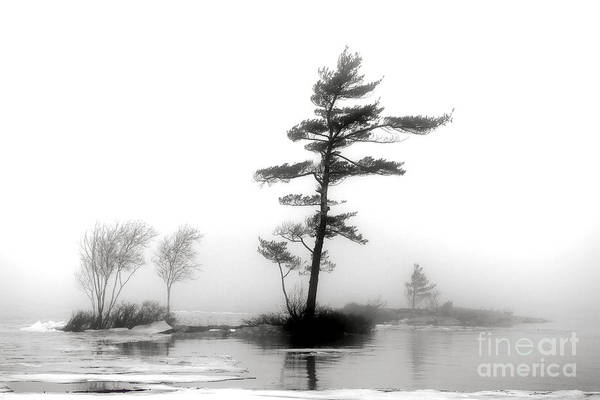 Photograph - Pine Tree In Winter Fog by Olivier Le Queinec