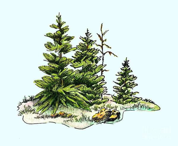Wallpaper Mixed Media - Pine Tree Watercolor Ink Image I         by Dale Jackson