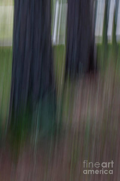 Photograph - Pine Tree Whimsy by Dale Powell