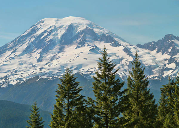 Photograph - Pine Trees And Mount Rainier  by Dan Sproul