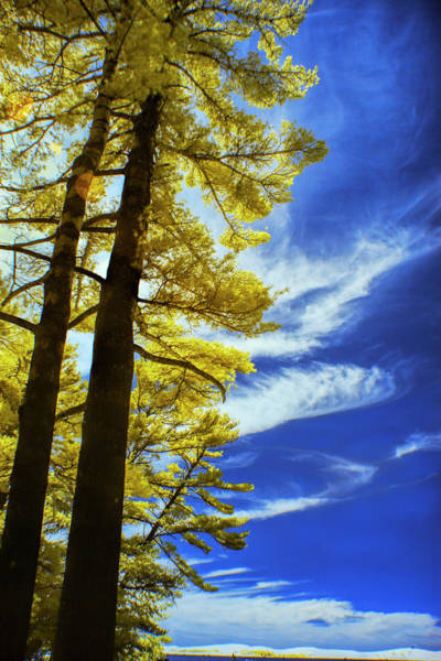 Photograph - Pine Trees In Infrared At Silver Lake by Randall Nyhof