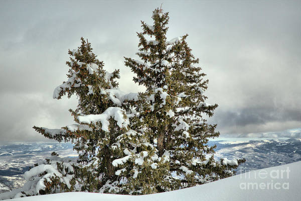 Photograph - Pine Trees In The Clouds by Adam Jewell
