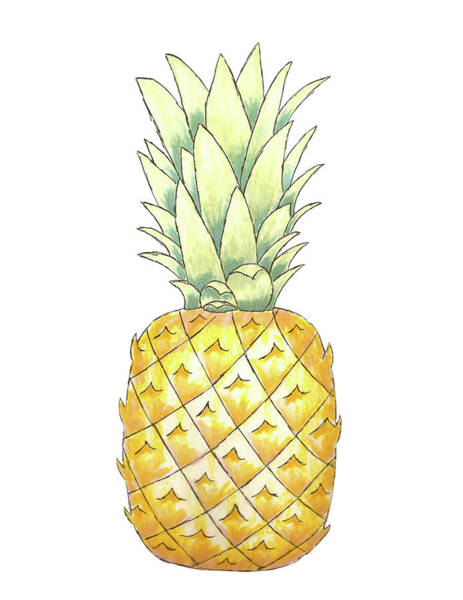 Pineapples Drawing - Pineapple by Courtney Moore