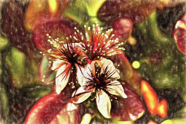 Photograph - Pineapple Guava Art by Kay Brewer