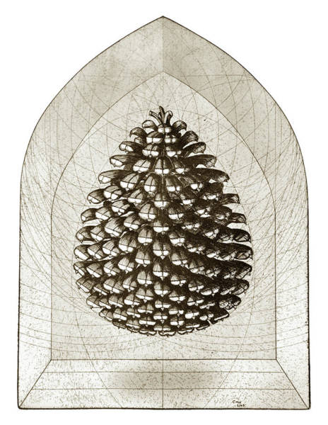 Drawing - Pine Cone by Charles Harden