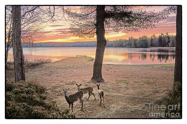 Poconos Wall Art - Photograph - Pinecrest Lake Pocono Mountains 25 by Jack Paolini