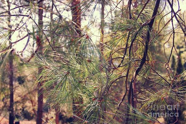 Wall Art - Photograph - Pineforest by Jackie Mestrom