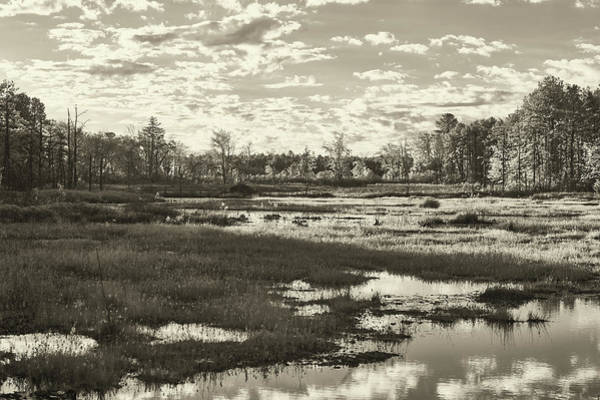 Photograph - Pinelands In Black And White by Jim Cook