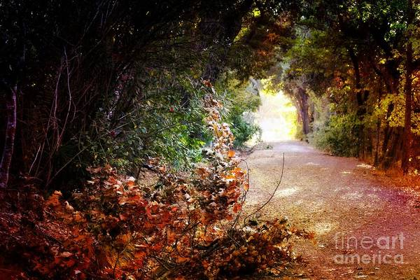 Piner Creek Path Art Print