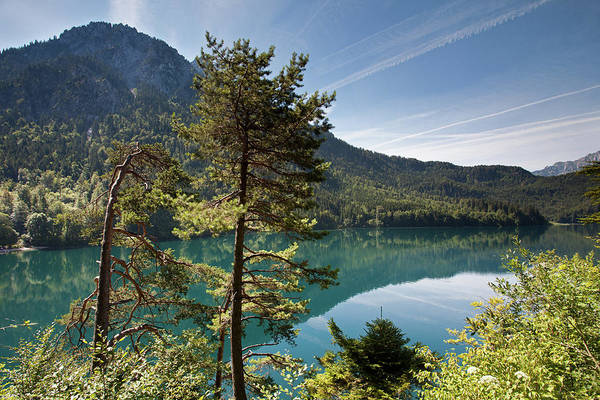 Photograph - Pines And Alpsee by Aivar Mikko