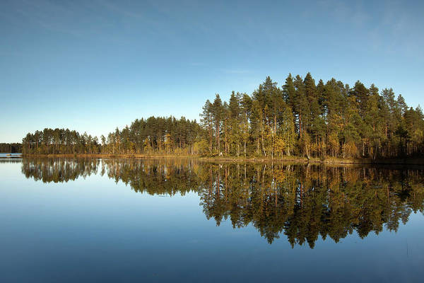 Photograph - Pines And Reflection by Aivar Mikko