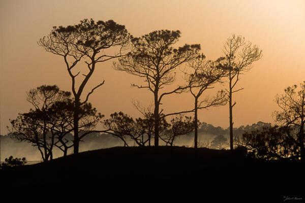 Grayton Beach State Park Photograph - Pines At Sunrise Grayton Beach Florida by John Harmon