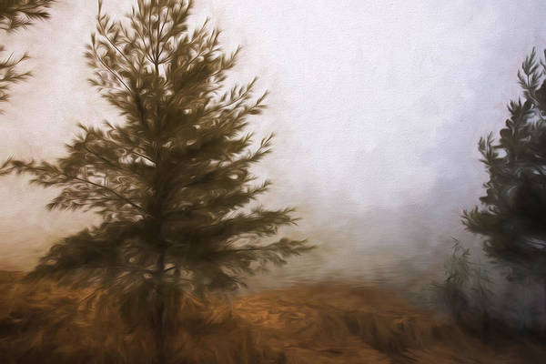 Photograph - Pines In The Mist by Evie Carrier