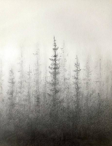Mist Drawing - Pines In The Mist by Greg Lowman